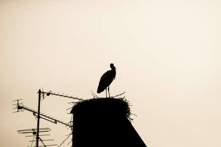 silhouette of wild stork in nest on the house roof by sunset Stockfoto