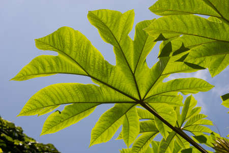 Closeup of plant with big leaves on blue sky background