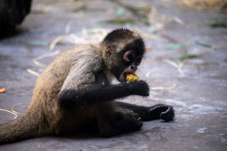 Portrait of baby monkey eating in a zoologic park