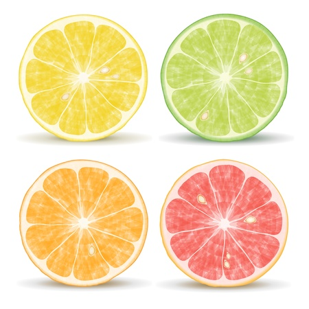 citrus fruits: orange, lime, grapefruit and lemon Vector