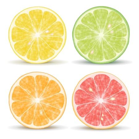 citrus fruits: orange, lime, grapefruit and lemon Illustration