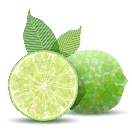 lime slice: Stylized fresh lime isolated on white Illustration