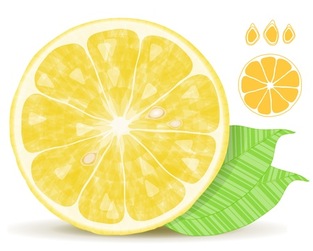 Fresh lemon citrus isolated on white background Stock Vector - 11593299