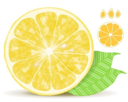 Fresh lemon citrus isolated on white background Stock Vector - 11593299