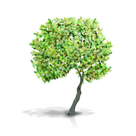 reforestaci�n: �rbol aislado en blanco