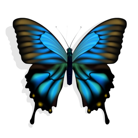 Blue butterfly Stock Vector - 12473515