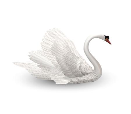 White Swan Stock Vector - 12473536