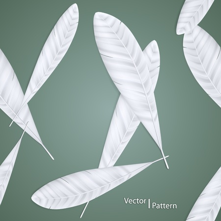 Background of Feathers Stock Vector - 12473544