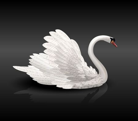 White swan on black water Stock Vector - 12473555