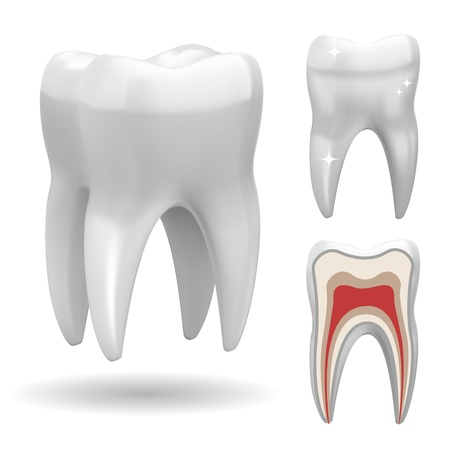 cavities: Isolated three-dimensional tooth, with front and cut version