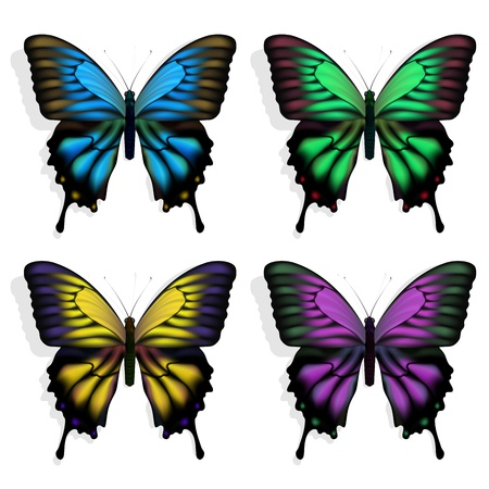purple butterfly: Vector blue, green, purple and yellow butterflies on white