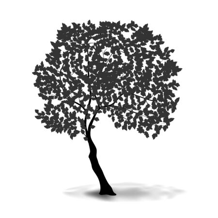 tree crown: Vector silhouette of spreading tree with aerial crown