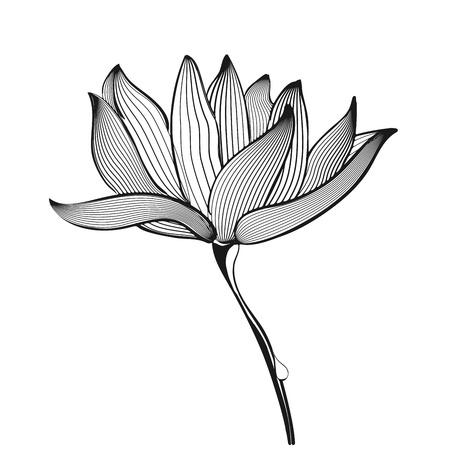 Vector black and white Flower on white background Stock Vector - 14441308