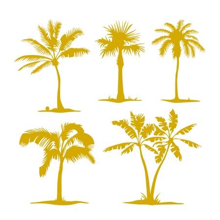 carribean: contornos de palma aislada en conjunto Ilustraci�n blanco Vectores