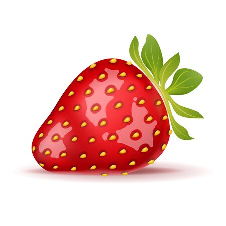 Ripe strawberry isolated on white  illustration
