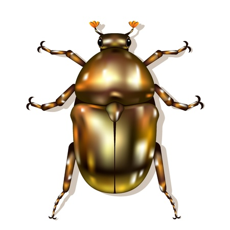 shiny bronze Beetle isolated on white Stock Vector - 15604917