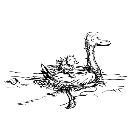 webbed: Hand-drawn swimming Duck with pickaback duckling illustration