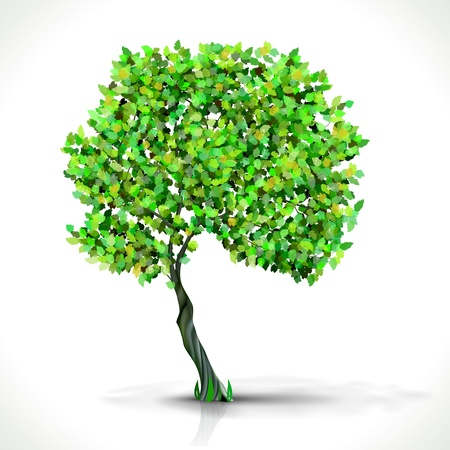 Green Tree isolated on white  Illustration Stock Vector - 16002258