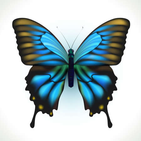 Realistic bright Butterfly isolated on white  Illustration Stock Vector - 16002283