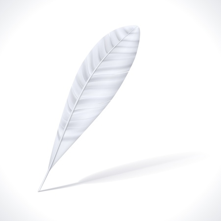 waft: White Feather with shadow  Vector Illustration isolated on white