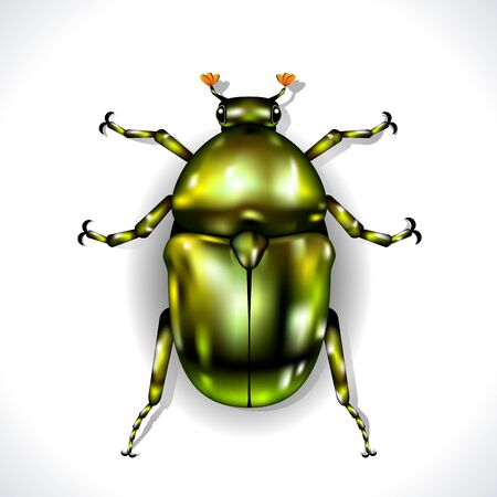 Green Beetle isolated on white background  Vector Illustration Stock Vector - 16668576