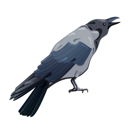 Hooded Crow isolated on white background Vector