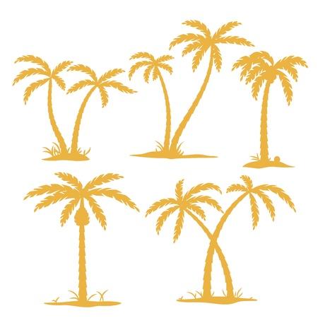 palmtrees: Vector de Palm contornos de �rboles aislados en blanco