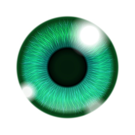 Vector Human Green Eye isolated on white Stock Vector - 17905525