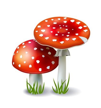 toxic mushroom: Red Mushroom Amanita with grass isolated on white background Illustration