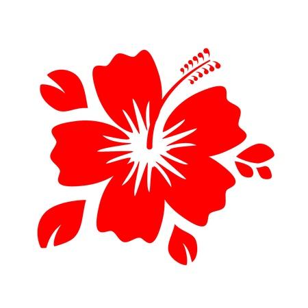 beautiful red hibiscus flower: Esquema Flor roja del hibisco aislada en el fondo blanco