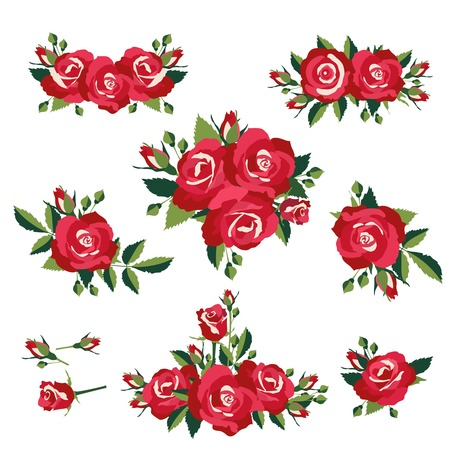 an inflorescence: inflorescence or bouquets of roses on white background vector illustration