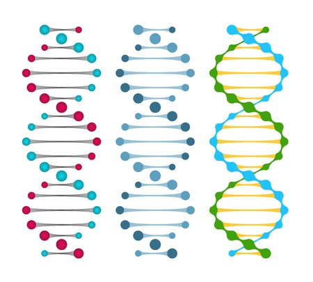 bonds: Three variants of double strand DNA molecules showing the nucleotide pairs in a double helix  illustration