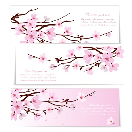 pink backgrounds: Three banners with fresh pink ornamental Sakura flowers  or cherry blossom  symbolic of spring on long twigs on white and pink backgrounds with copyspace for text