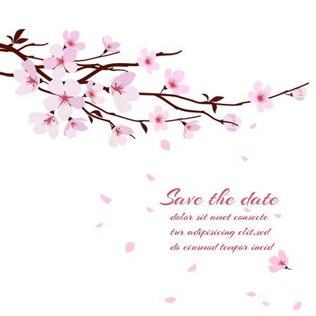 Cherry blossom, sakura tak met roze bloemen. Wenskaart vector sjabloon