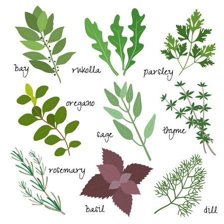 healing, medicinal and fragrant herbs Vector