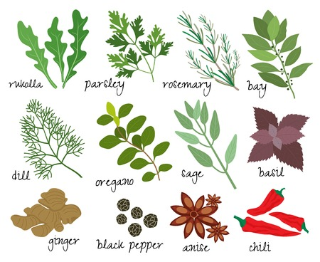names: Set of vector illustrations of herbs and spices with sprigs of fresh rosemary  rocket  parsley  bay leaves  dill  oregano  sage  basil  root ginger  black peppercorns  anise and red hot chillies