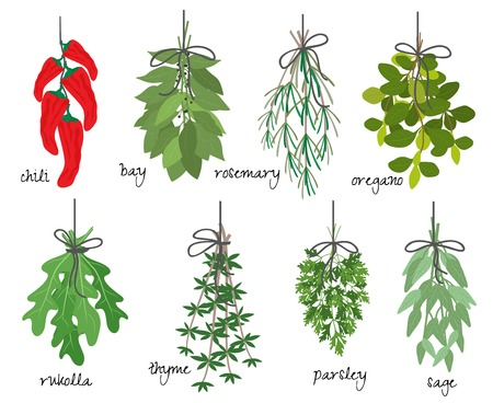 origanum: illustration with eight different bunches of medicinal aromatic herbs