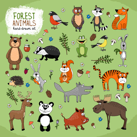 thrush: Forest Animals large set hand-drawn illustration with a wolf  fox  bears  panda  owl  raccoon  tiger  bunny  hedgehog  moose  deer  warthog  badger  squirrel  frog and birds Illustration