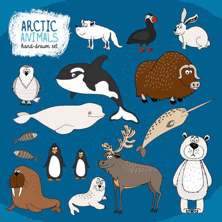 Set of hand-drawn arctic animals on a cold blue background with a polar bear  bison  reindeer  orca  beluga whale and narwhal  hare  fox  puffin  walrus  seal and penguins