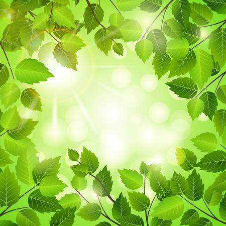 verdant: Spring frame of green leaves