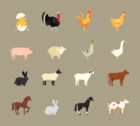 ponies: Farm animals set in flat style Illustration