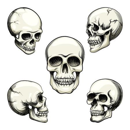mortalidad: vistas del cr�neo humano Vectores