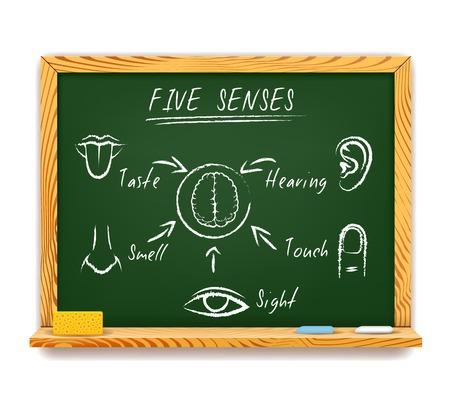 The Five Senses Vector