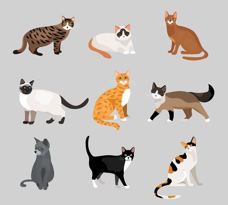 Set of cute cartoon kitties or cats Illustration
