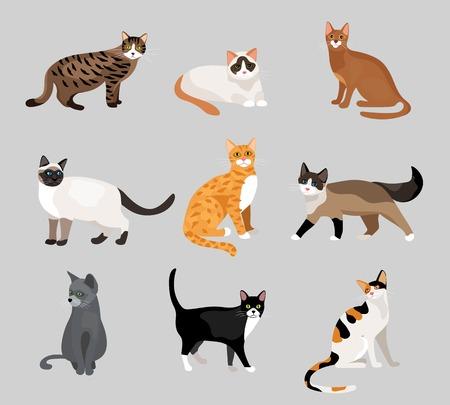 kotów: Zestaw ślicznych kociaków kreskówek i kotów Ilustracja