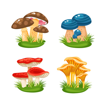 boletus: mushrooms in grass
