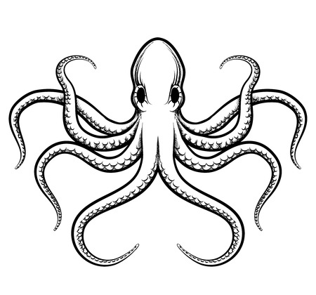 etched: Vector octopus illustration