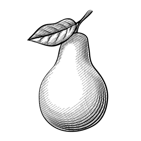 pear tree: Etching pear