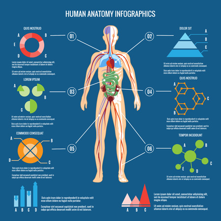 body blood: Colored Human Body Anatomy Infographic Design on Blue Green Background.