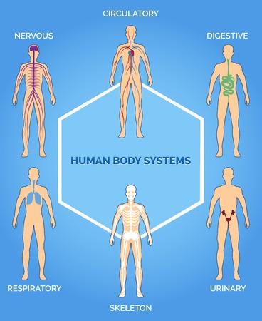 Vector menselijk lichaam systemen illustratie